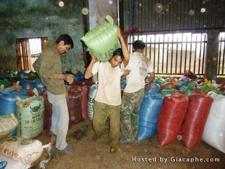 Doanh nghiệp cà phê Daklak